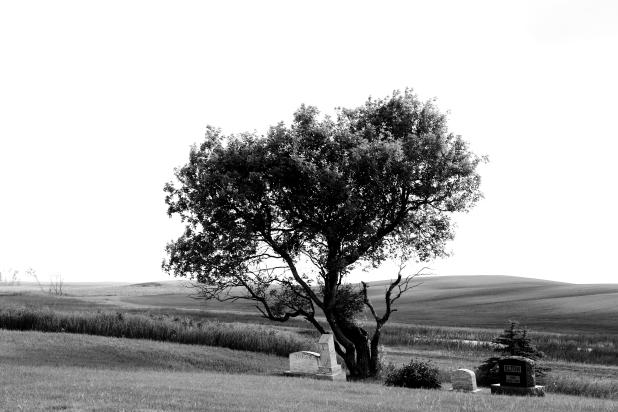 Tree Stones Field horizontal BW