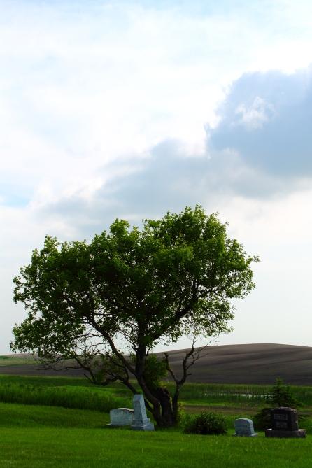 Tree Stones Field